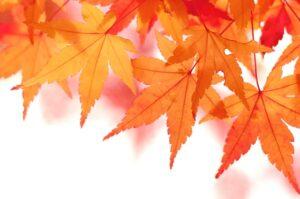 過ごし易い秋の予感【海老名市 綾瀬市 新築分譲 住宅コラムver.455】
